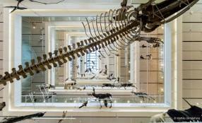 Hörmann Italia rinnova il proprio sostegno al MUSE di Trento